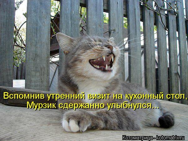 Котоматрица: Вспомнив утренний визит на кухонный стол, Мурзик сдержанно улыбнулся...