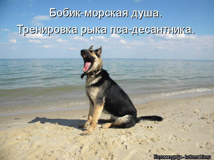 Котоматрица: Бобик-морская душа. Тренировка рыка пса-десантника.