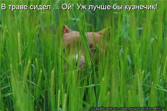 Котоматрица: В траве сидел ... Ой! Уж лучше бы кузнечик!
