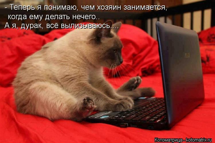 Котоматрица: - Теперь я понимаю, чем хозяин занимается, когда ему делать нечего.. А я, дурак, всё вылизываюсь....