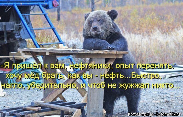Котоматрица: -Я пришёл к вам, нефтяники, опыт перенять:  хочу мёд брать, как вы - нефть...Быстро,  нагло, убедительно, и чтоб не жужжал никто...