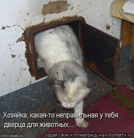 Котоматрица: Хозяйка, какая-то неправильная у тебя дверца для животных....