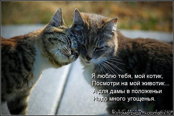 Открытки люблю тебя котик