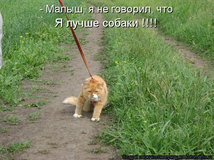 Котоматрица: - Малыш, я не говорил, что Я лучше собаки !!!!