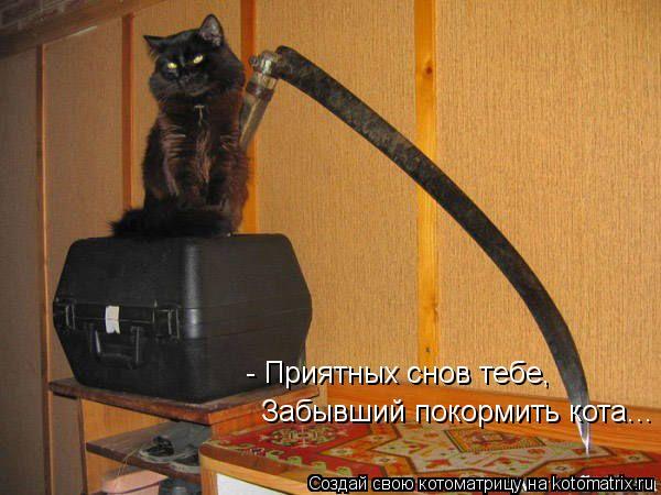 Котоматрица: - Приятных снов тебе, Забывший покормить кота...