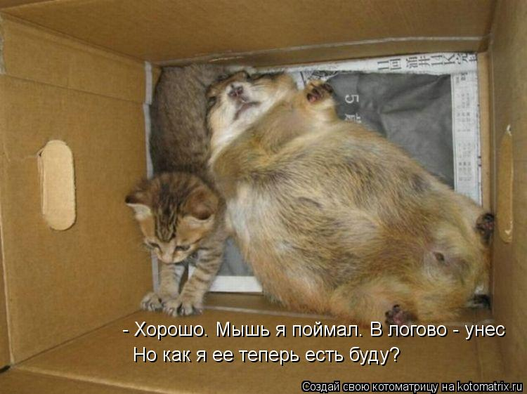 Котоматрица: - Хорошо. Мышь я поймал. В логово - унес Но как я ее теперь есть буду?