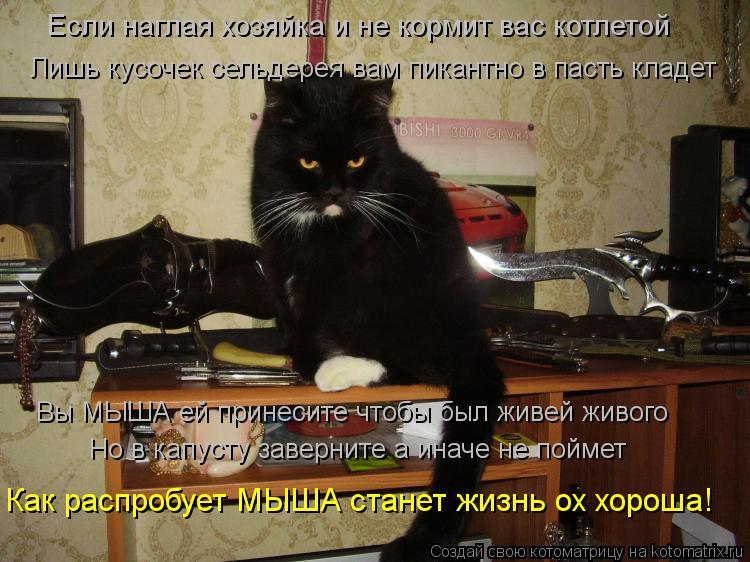 Котоматрица: Если наглая хозяйка и не кормит вас котлетой Лишь кусочек сельдерея вам пикантно в пасть кладет Вы МЫША ей принесите чтобы был живей живого