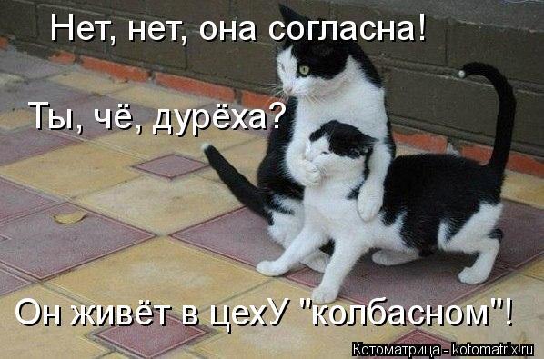 "Котоматрица: Нет, нет, она согласна! Ты, чё, дурёха? Он живёт в цехУ ""колбасном""!"