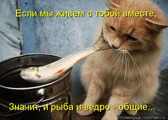 Котоматрица: Если мы живем с тобой вместе, Значит, и рыба и ведро - общие...
