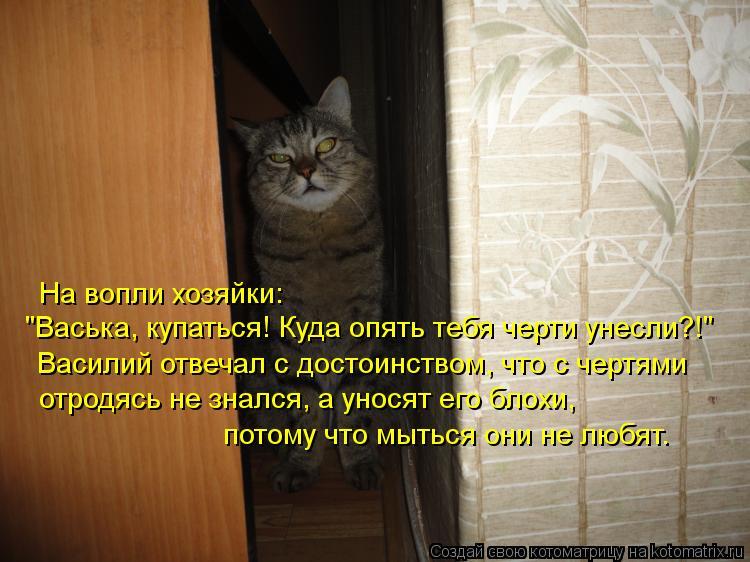 """Котоматрица: На вопли хозяйки:  Василий отвечал с достоинством, что с чертями отродясь не знался, а уносят его блохи, потому что мыться они не любят. """"Вась"""