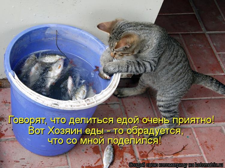 Котоматрица: Говорят, что делиться едой очень приятно! Вот Хозяин еды - то обрадуется, что со мной поделился!