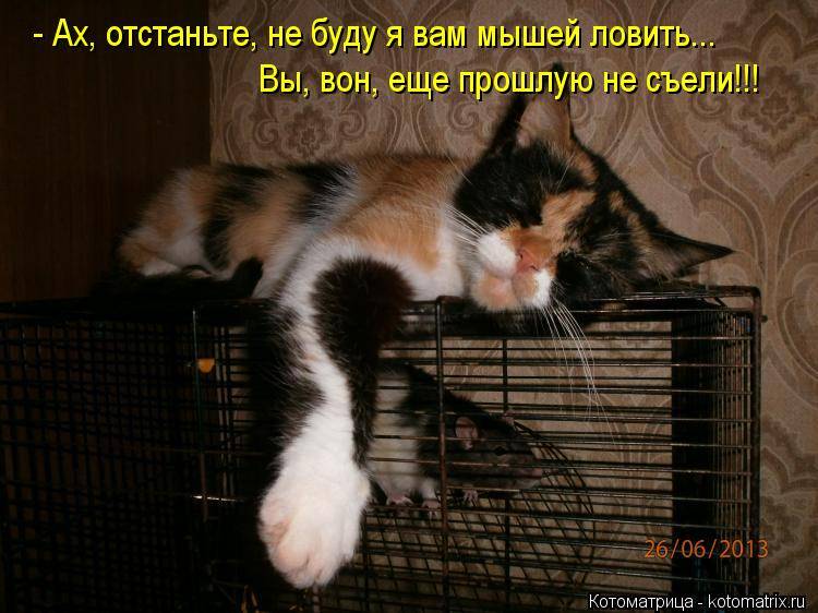Котоматрица: - Ах, отстаньте, не буду я вам мышей ловить... Вы, вон, еще прошлую не съели!!!