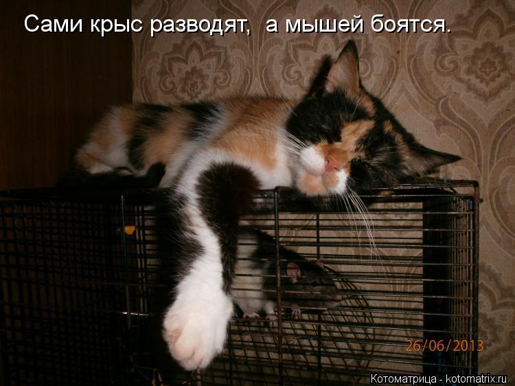 Котоматрица: Сами крыс разводят,  а мышей боятся.