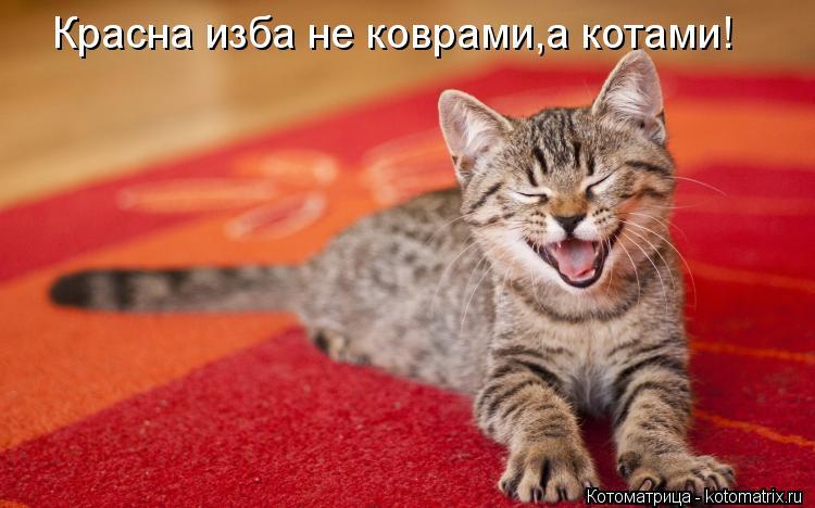 Котоматрица: Красна изба не коврами,а котами!