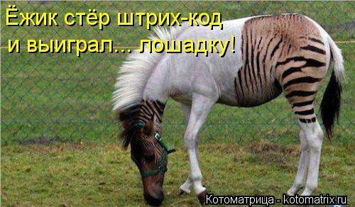 Котоматрица: Ёжик стёр штрих-код  и выиграл... лошадку!