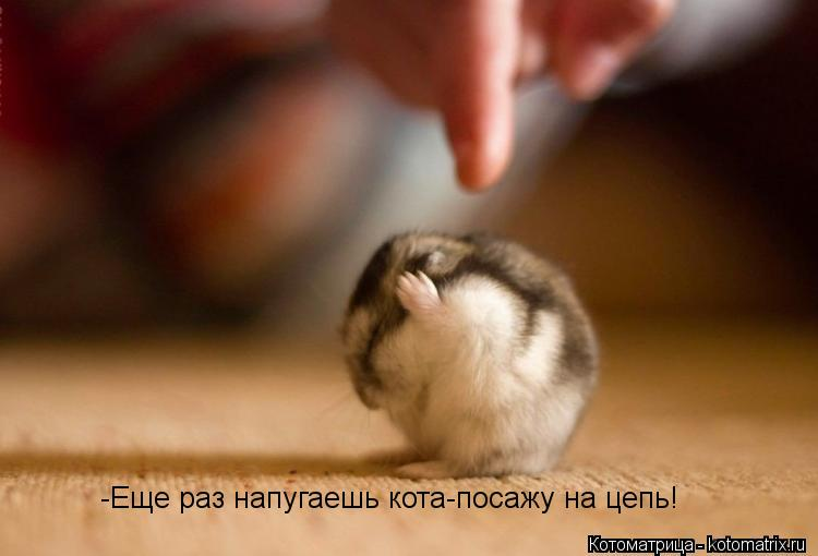 Котоматрица: -Еще раз напугаешь кота-посажу на цепь!