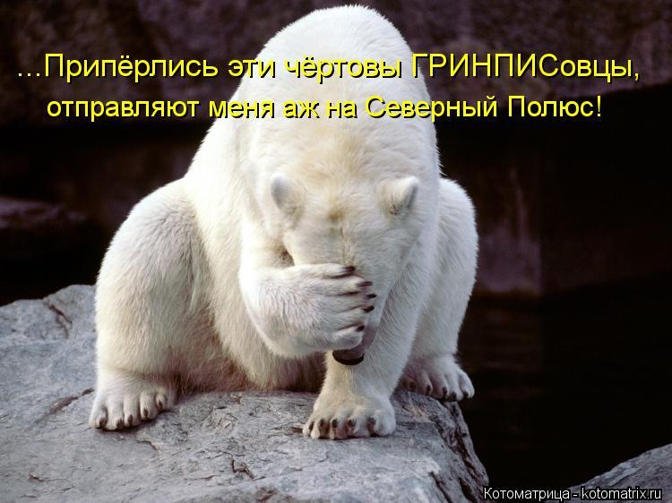 Котоматрица: ...Припёрлись эти чёртовы ГРИНПИСовцы, отправляют меня аж на Северный Полюс!