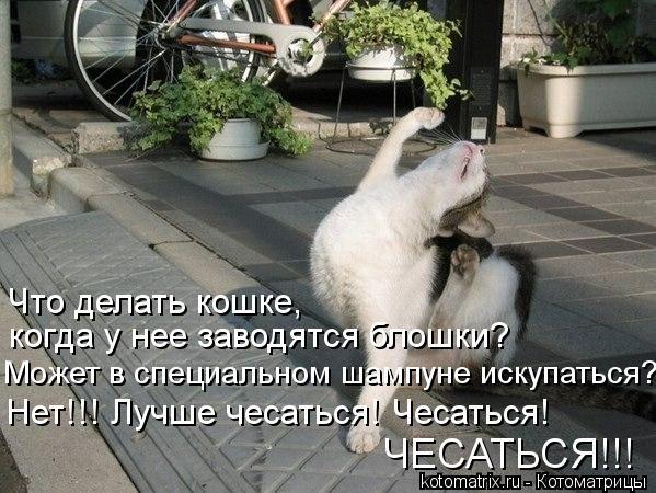 Котоматрица: Что делать кошке, когда у нее заводятся блошки? Может в специальном шампуне искупаться? Нет!!! Лучше чесаться! Чесаться! ЧЕСАТЬСЯ!!!