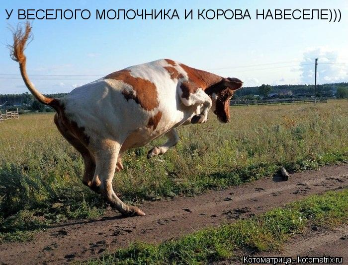 Котоматрица: У ВЕСЕЛОГО МОЛОЧНИКА И КОРОВА НАВЕСЕЛЕ)))