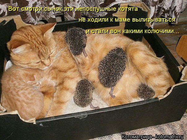 Котоматрица: Вот смотри,сынок,эти непослушные котята не ходили к маме вылизываться и стали вон какими колючими...