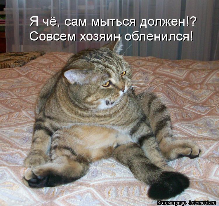 Котоматрица: Я чё, сам мыться должен!? Совсем хозяин обленился!