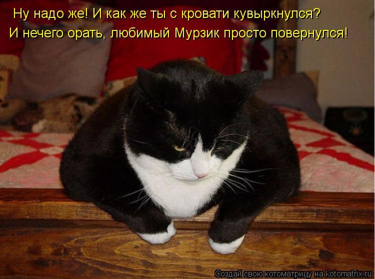 Котоматрица: Ну надо же! И как же ты с кровати кувыркнулся? И нечего орать, любимый Мурзик просто повернулся!