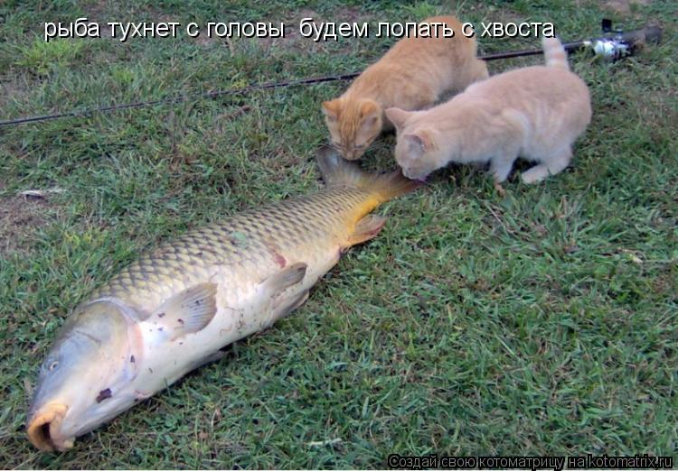 Котоматрица: рыба тухнет с головы  будем лопать с хвоста