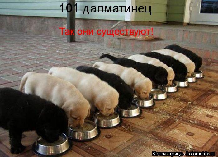 Котоматрица: 101 далматинец Так они существуют!