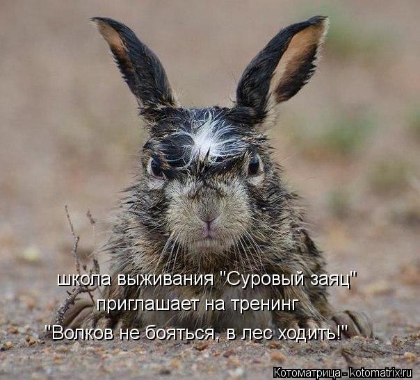 """Котоматрица: школа выживания """"Суровый заяц"""" приглашает на тренинг """"Волков не бояться, в лес ходить!"""""""
