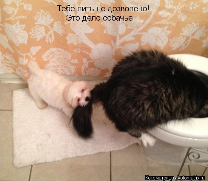 Котоматрица: Тебе пить не дозволено! Это дело собачье!