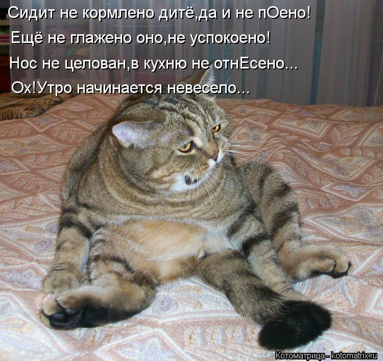Котоматрица: Сидит не кормлено дитё,да и не пОено! Ещё не глажено оно,не успокоено! Нос не целован,в кухню не отнЕсено... Ох!Утро начинается невесело...