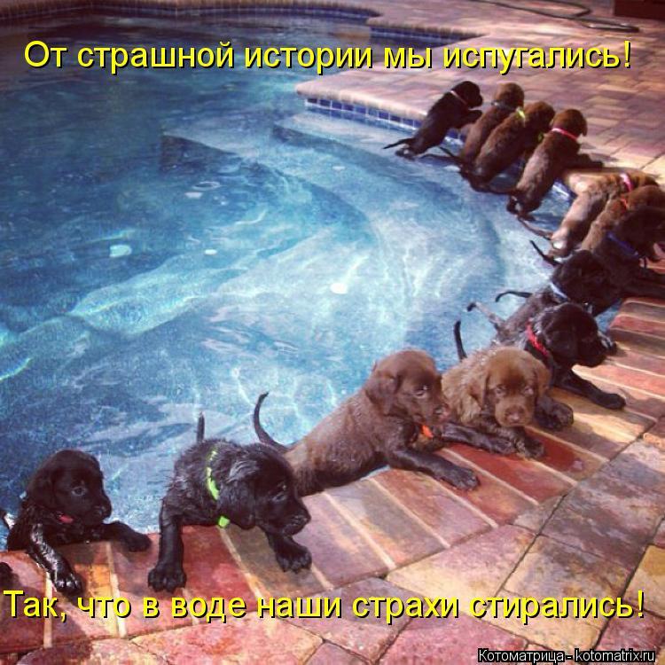 Котоматрица: Так, что в воде наши страхи стирались! От страшной истории мы испугались!