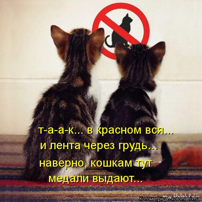 Котоматрица: таак... в красном вся... т-а-а-к... в красном вся... и лента через грудь... наверно, кошкам тут  медали выдают...