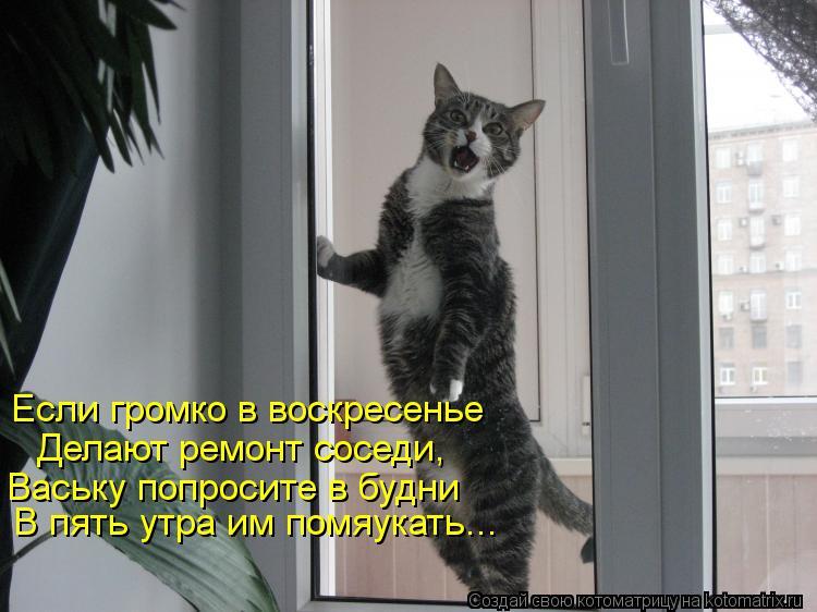 Котоматрица: Если громко в воскресенье Делают ремонт соседи, Ваську попросите в будни В пять утра им помяукать...