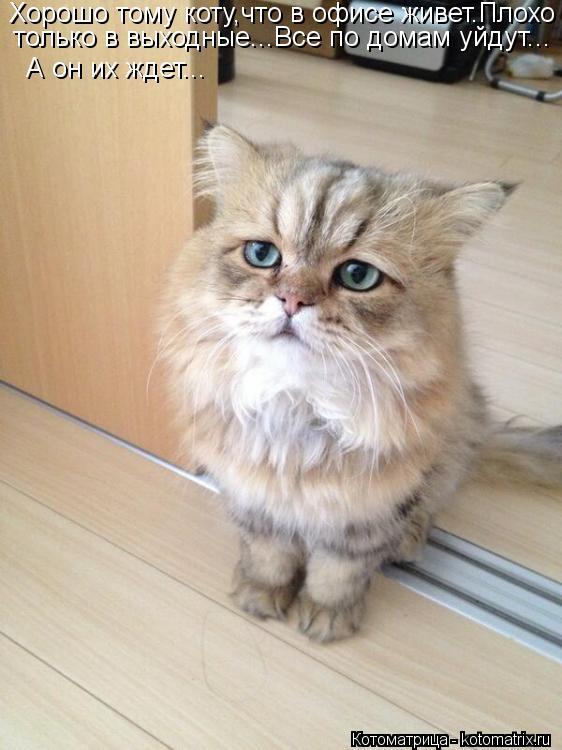 Котоматрица: Хорошо тому коту,что в офисе живет.Плохо только в выходные...Все по домам уйдут... А он их ждет...