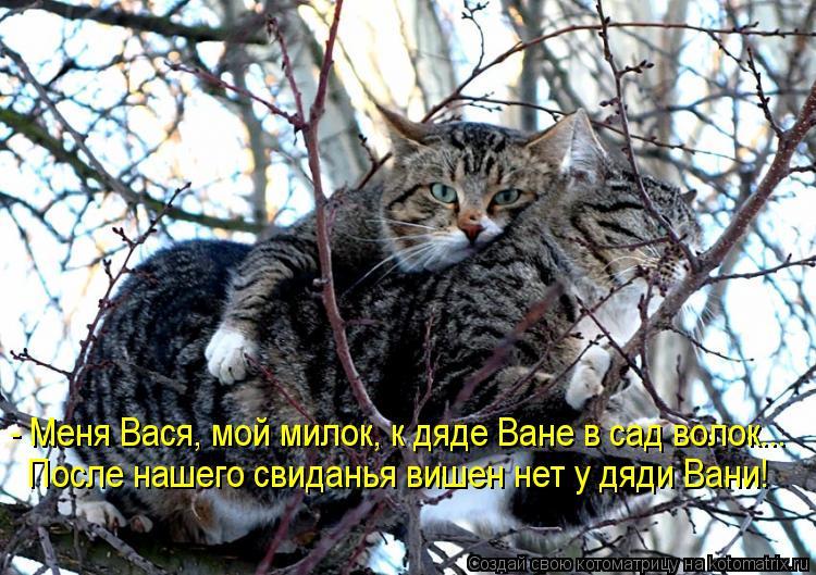 Котоматрица: - Меня Вася, мой милок, к дяде Ване в сад волок... После нашего свиданья вишен нет у дяди Вани!