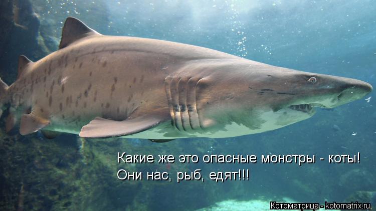 Котоматрица: Какие же это опасные монстры - коты! Они нас, рыб, едят!!!