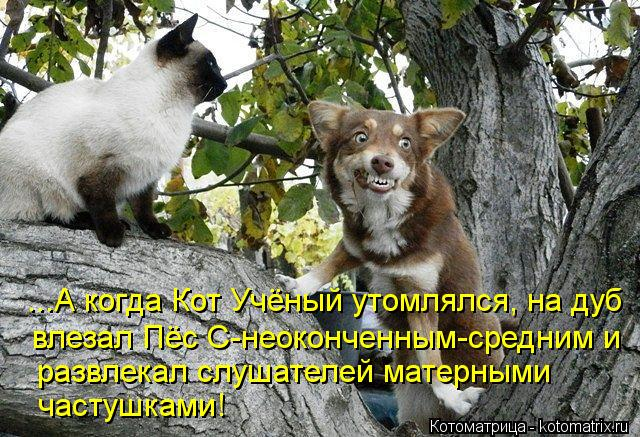 Котоматрица: ...А когда Кот Учёный утомлялся, на дуб  влезал Пёс С-неоконченным-средним и развлекал слушателей матерными  частушками!