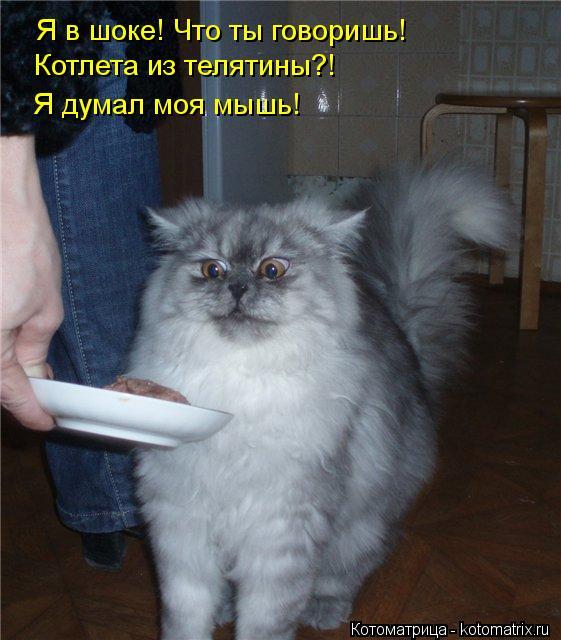 Котоматрица: Я в шоке! Что ты говоришь! Котлета из телятины?! Я думал моя мышь!