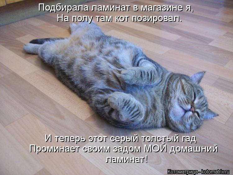 Котоматрица: Подбирала ламинат в магазине я, На полу там кот позировал. И теперь этот серый толстый гад Проминает своим задом МОЙ домашний  ламинат!