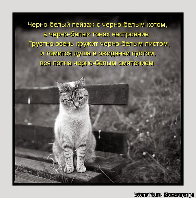 Котоматрица: Черно-белый пейзаж с черно-белым котом, в черно-белых тонах настроение... Грустно осень кружит черно-белым листом, и томится душа в ожиданьи