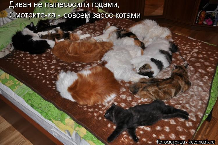 Котоматрица: Диван не пылесосили годами, Смотрите-ка -  совсем зарос котами