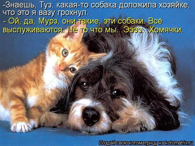 Котоматрица: -Знаешь, Туз, какая-то собака доложила хозяйке, что это я вазу грохнул. - Ой, да, Мурз, они такие, эти собаки. Всё  выслуживаются. Не то что мы...Ээ