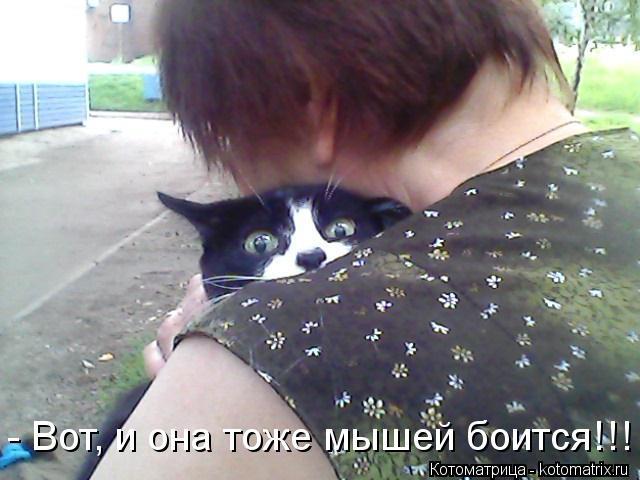 Котоматрица: - Вот, и она тоже мышей боится!!!