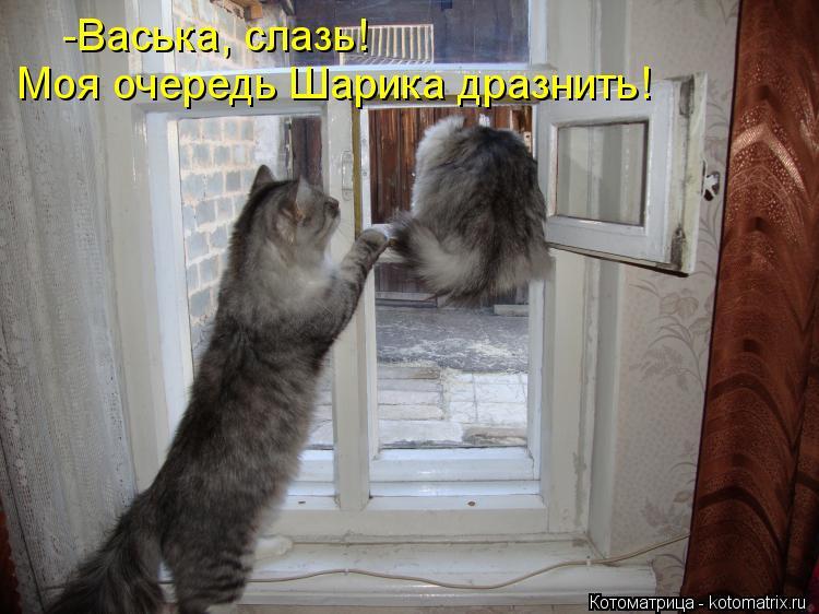 Котоматрица: -Васька, слазь! Моя очередь Шарика дразнить!