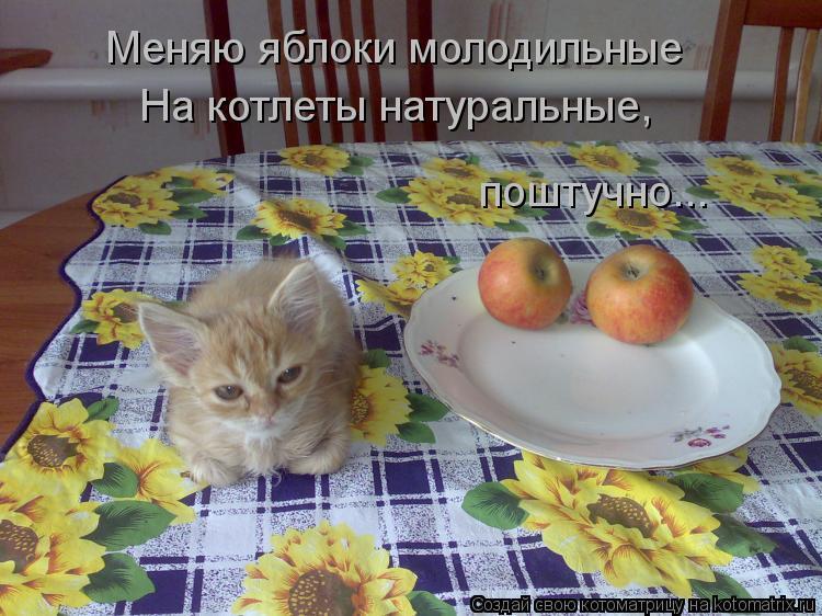 Котоматрица: Меняю яблоки молодильные На котлеты натуральные, поштучно...