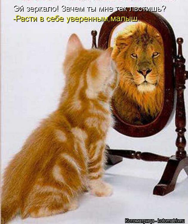 Котоматрица: Эй зеркало! Зачем ты мне так льстишь? -Расти в себе уверенным,малыш.