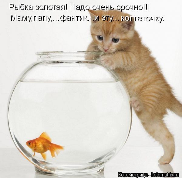 Котоматрица: Рыбка золотая! Надо очень срочно!!! Маму,папу,...фантик...и эту... когтеточку.