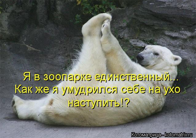 Котоматрица: Как же я умудрился себе на ухо  наступить!? Я в зоопарке единственный...