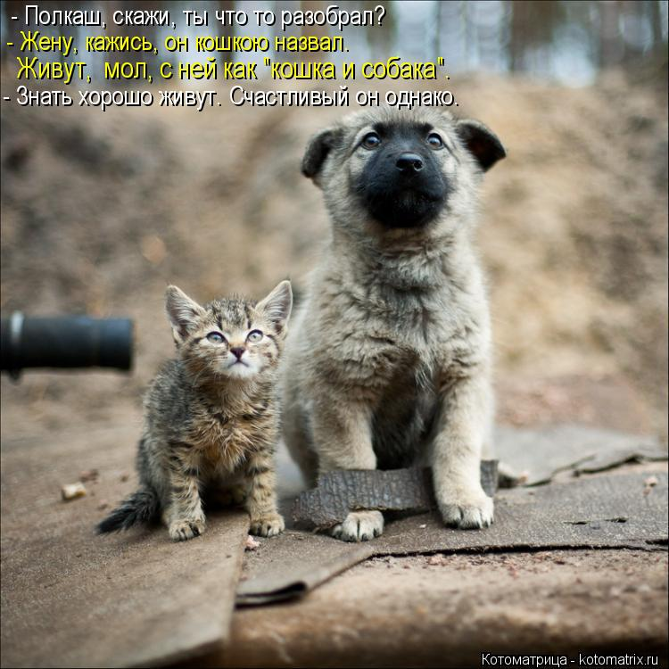 """Котоматрица: - Полкаш, скажи, ты что то разобрал? - Жену, кажись, он кошкою назвал. Живут,  мол, с ней как """"кошка и собака"""". - Знать хорошо живут. Счастливый он о"""